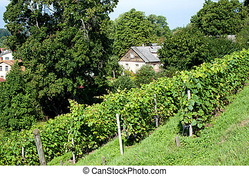 View of house and vineyard