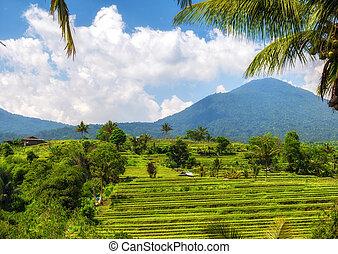 View of Jatiluwih rice terrace, Bali.