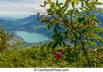 view of Lake Annecy with a tree in the foreground