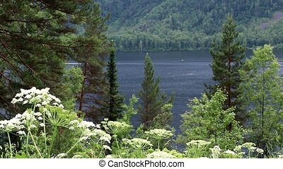 View of Lake Teletskoye in the Altai Republic
