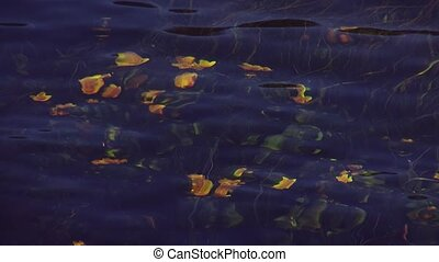 View of many grown yellow flowers wave under clear water of river. Summer day. Nature. Green stems