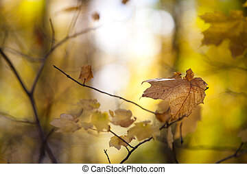 view of maple leaves