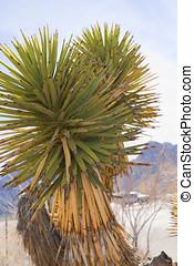 View of Mojave Desert.