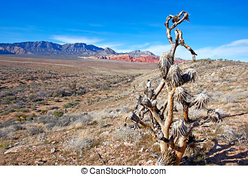 View of Mojave Desert. - View of dry landscape and red rock...