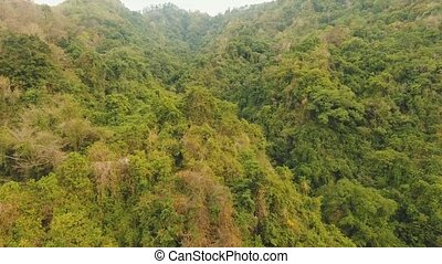 View of mountain forest landscape. Bali - Aerial view...