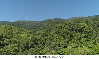 View of mountain landscape with rainforest. - Aerial view of...