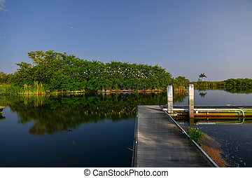 Florida Everglades - View of nature scene in the tropical...