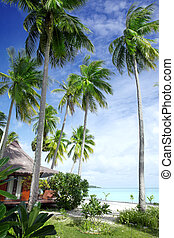 View of nice bungalow on  tropical