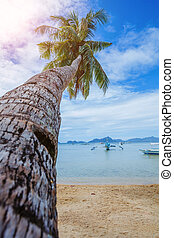 View of nice tropical beach with palms