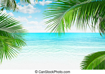 palms - View of nice tropical beach with some palms around...
