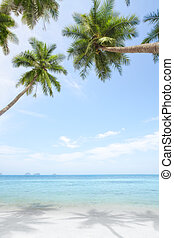 tropic - View of nice tropical beach with some palms around