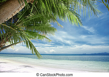 tropic - View of nice tropical beach with some palms around...