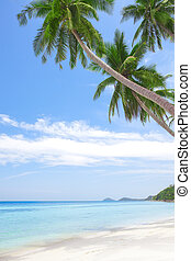 tropic - View of nice tropical beach with some palms