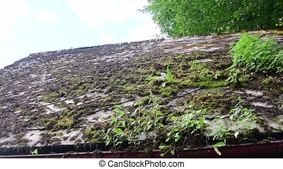 View of old roof. Roof with moss