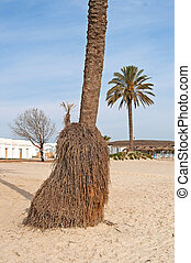View of palm bottom on the beach in Tunisia
