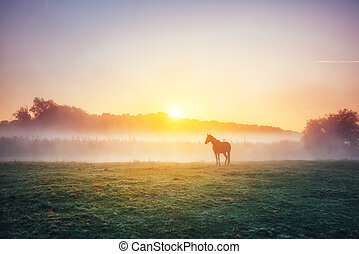View of pasture with Arabian horse grazing in the sunlight. Beauty world. Soft filter. Warm toning effect.