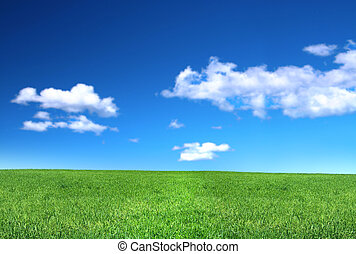 view of peaceful grassland, blue sky above, focus set in foreground