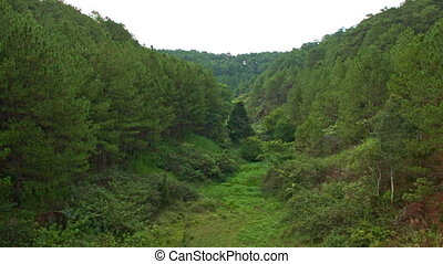 View of Pine Forest with Old River-bed Covered with Green Grass