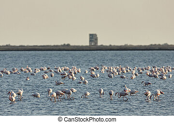 View of pink flamingos birds in Evros river, Greece.