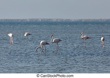 View of pink flamingos in Evros, Greece.