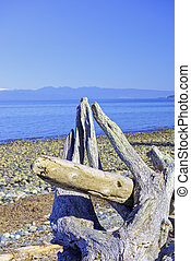 Rathtrevor Beach provincial park during low tide in Vancouver Island