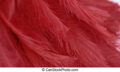 View of red istrich feather