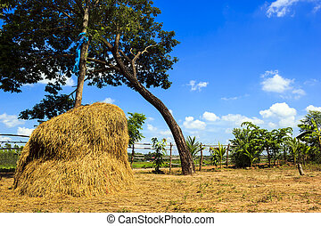 View of rice field with blue sky in rural