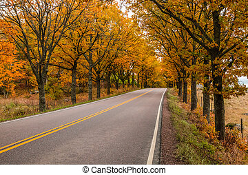View of road with oak trees alley at autumn