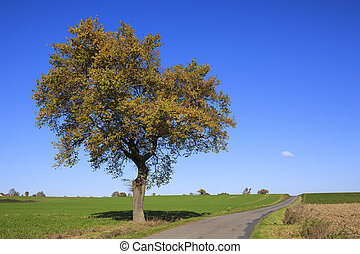 tree on a sunny day in autumn