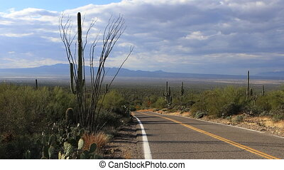 View of roadside in Tucson Mountain Park - A View of...