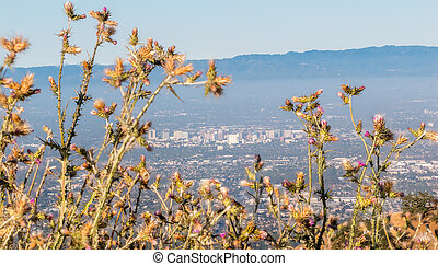 View of San Jose with Throne Flowers in the Foreground