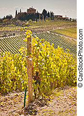 Tuscany - View of scenic Tuscany landscape with vineyard in ...