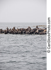 View Of Sea Lions Resting On Beach At Coast