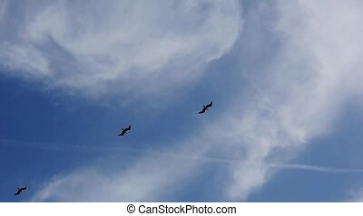 View of several seagull birds flying in blue sky. Trail from...