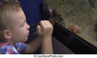 View of small blond boy standing near aquarium with crabs, Valencia, Spain