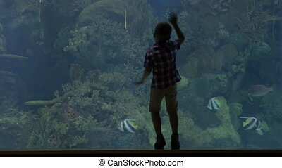 View of small blond boy standing near aquarium with crabs,...