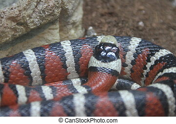 Snakes at bend wildlife preserve - View of Snakes at bend ...