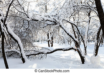 view of snow-covered garden in winter morning