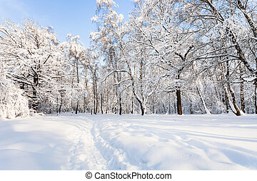 view of snowy forest park in winter morning
