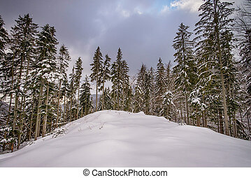 View of snowy trees in the mountains