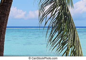 View of South Pacific through Palm