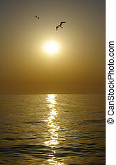 View of sunset and gulls