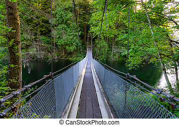 View of Suspension Bridge over the water in Green and Vibrant Rain Forest