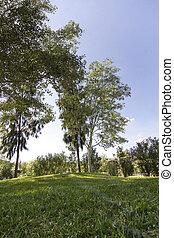 tall green trees on a urban park