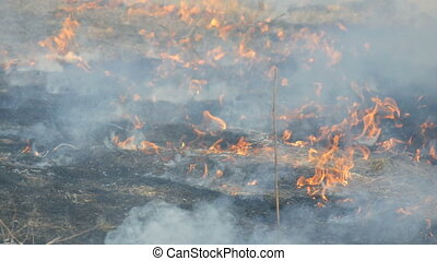 View of terrible dangerous wild fire in the daytime in the...