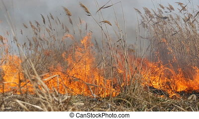 View of terrible dangerous wild high fire in the daytime in...