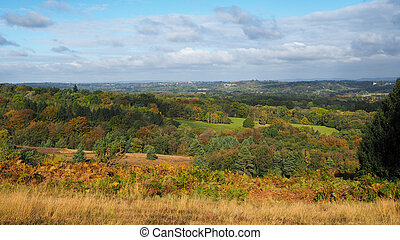 View of the Ashdown Forest in Autumn