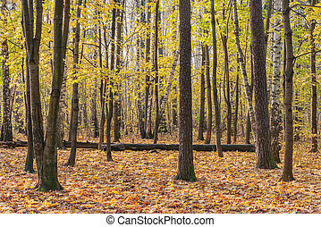 View of the autumn forest at day time.