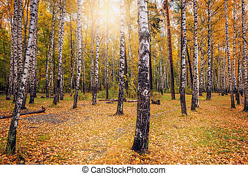 View of the autumn forest.