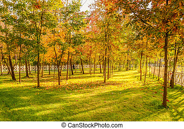 View of the autumn park with sun rays
